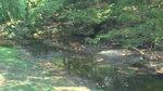水辺で涼む鹿.JPG